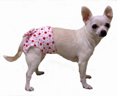 Woman arrested for sharing pictures of a neighbour's dog wearing a diaper