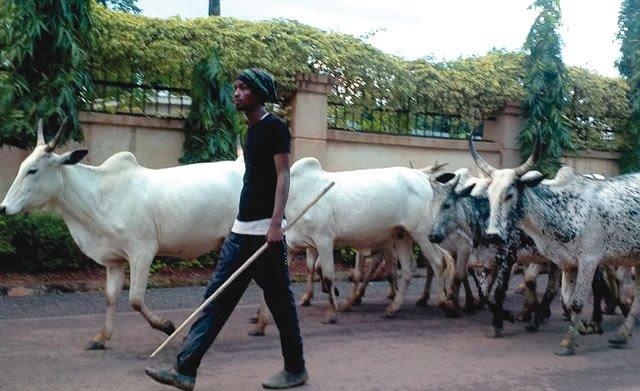 Fulani Herdsmen Invades Enugu - 20 Reported Dead