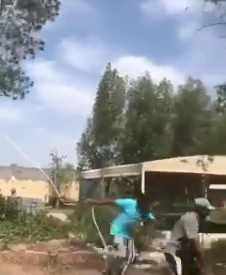 Tree Falls On A Man Trying To Pull It Down