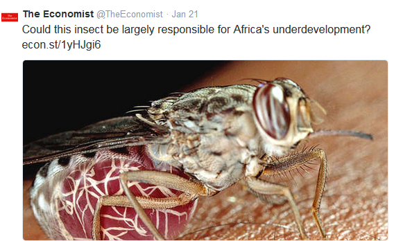 Could this insect be responsible for the underdevelopment in Africa?
