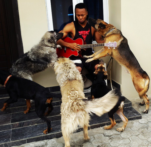 Flavour with his dogs 2Pac, Major Bangs, Miley, Jay Z and Nicki